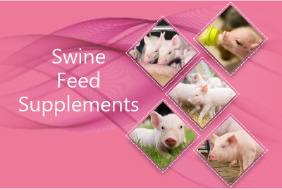 Swine Feed Supplements