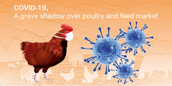 COVID-19, a grave shadow over poultry and feed market