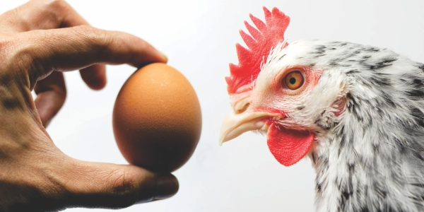 Mitigating Common Hazards at Poultry Farms, Backing Up The Eradication Program